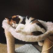 callie hammock